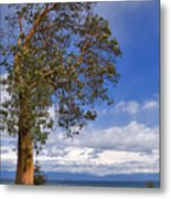 Arbutus Tree At Rathtrevor Beach British Columbia Metal Print