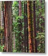 Arcata Forest Metal Print