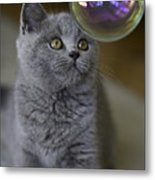 Archie With Bubble Metal Print