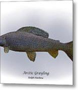 Arctic Grayling Metal Print