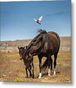 Arctic Tern Attacking Mare Metal Print