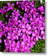 Arctic Wild Flowers Metal Print