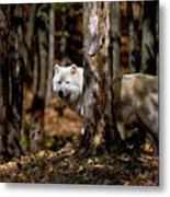 Arctic Wolf In Forest Metal Print