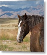 Are You Coming? Metal Print by Nicole Markmann Nelson