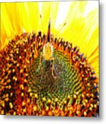 Are You Looking At Me - Butterfly Metal Print