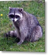 Are You Looking At Me... Metal Print