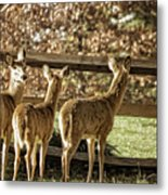 Are You Looking At Us Metal Print