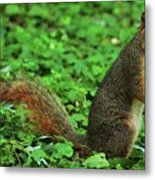 Are You Taking My Picture Again ? Metal Print
