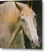 Are You Taking My Picture Metal Print