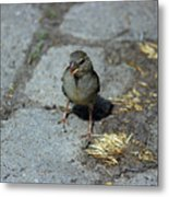 Are You Talking To Me? Metal Print