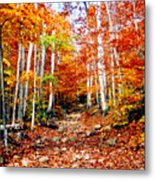 Arethusa Falls Trail Metal Print by Greg Fortier