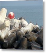 Arica Chile Sea Life Metal Print