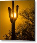 Arizona Cactus #1 Metal Print