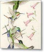 Arizona Hummingbirds Metal Print