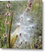 Arizona Milkweed Metal Print