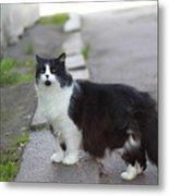 Arrogant Cat Metal Print