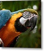 Art Macaw Metal Print