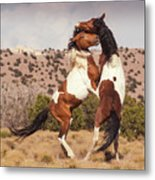 Art Of The Fight Metal Print