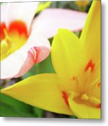 Art Prints Pink Tulip Yellow Tulips Giclee Prints Baslee Troutman Metal Print
