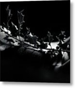 Artistic Nude Abstract Closeup Of A Thorny Holly Tree Branch On  Metal Print