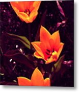 Artistic Tulips By Earl's Photography Metal Print
