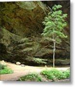 Ash Cave Tree Metal Print