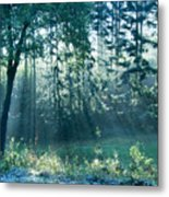 Ashenvale Forest Metal Print