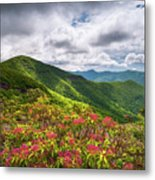 Asheville Nc Blue Ridge Parkway Spring Flowers North Carolina Metal Print