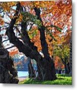Asian Cherry Trees Of Fall Metal Print