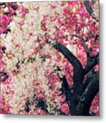 Asian Cherry Vignette Metal Print