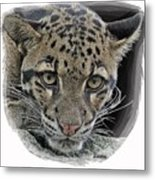 Asian Cloud Leopard Metal Print