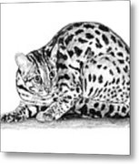 Asian Leopard Cat Metal Print
