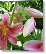 Asian Lilies Unfolding Metal Print