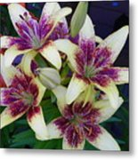 Asiatic Lillies Again Metal Print