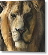 Asiatic Lion Metal Print