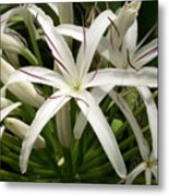 Asiatic Poison Lily Metal Print