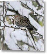 Asleep In The Snow - Mourning Dove Portrait Metal Print