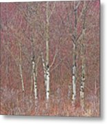 Aspen And Buckbrush Metal Print