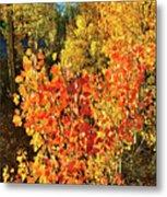 Aspen Colors In Dillon Colorado Metal Print
