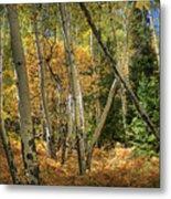 Aspen Ecosystem Metal Print