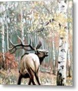 Aspen Elk Metal Print