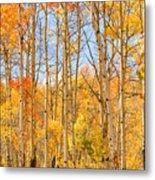 Aspen Fall Foliage Vertical Image Metal Print