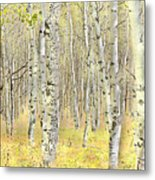 Aspen Forest 2 - Photo Painting Metal Print