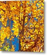 Aspen Glow Autumn Sky Metal Print