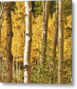 Aspen Gold Metal Print by James BO  Insogna