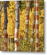 Aspen Gold Red White And Blue Metal Print