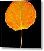 Aspen Leaf Metal Print