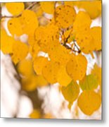 Aspen Leaves Metal Print by James BO  Insogna