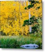 Aspen Pond Metal Print