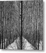Aspen Rows Metal Print